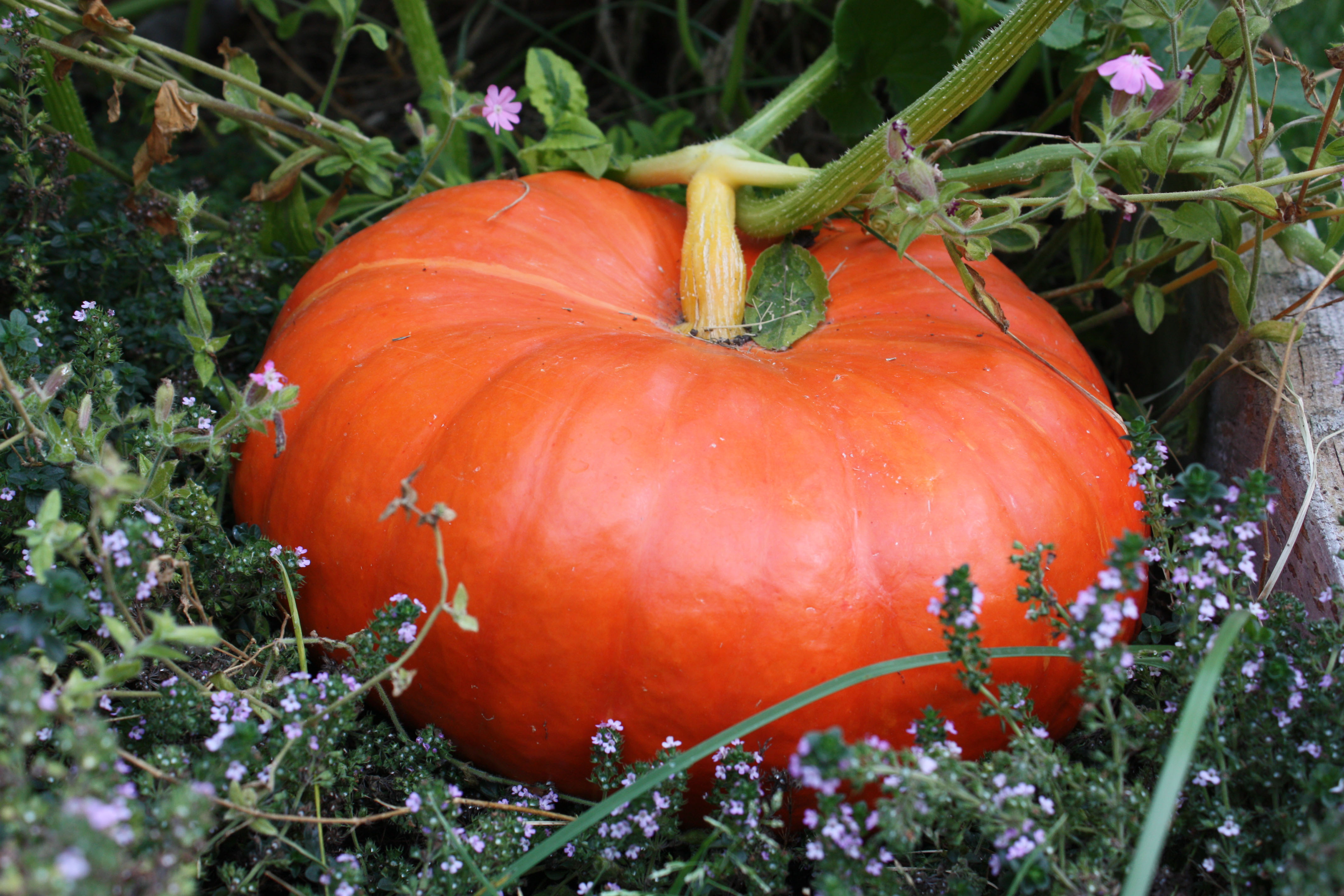 how to dry pumpkin seeds to eat in the sun